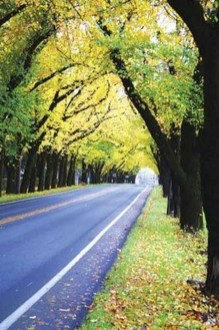 Incredibly Magical Tree Tunnels Worldwide You Must Walk Through Them35