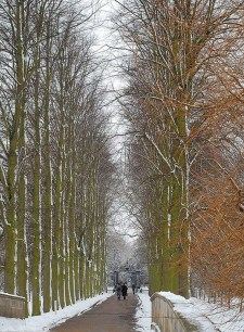 Incredibly Magical Tree Tunnels Worldwide You Must Walk Through Them36