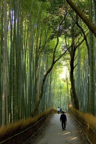 Incredibly Magical Tree Tunnels Worldwide You Must Walk Through Them37