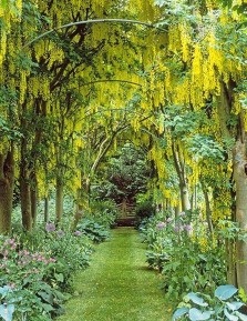 Incredibly Magical Tree Tunnels Worldwide You Must Walk Through Them38