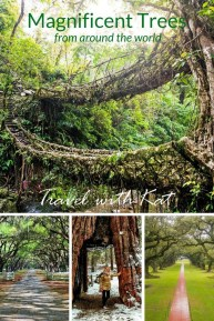 Incredibly Magical Tree Tunnels Worldwide You Must Walk Through Them40