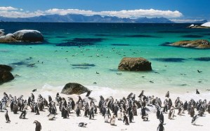 Of The Most Attractive White Sand Beaches You Must See06