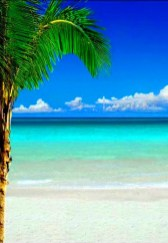 Of The Most Attractive White Sand Beaches You Must See38
