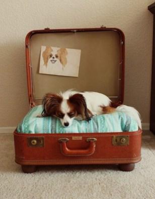 Diy Pet Bed Ideas27