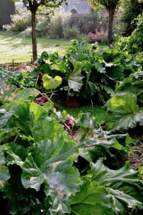Helpful Tips For Autumn Update Of Your Garden06