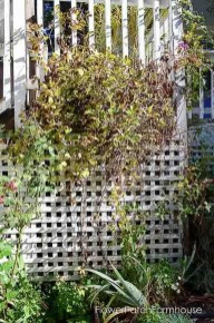 Helpful Tips For Autumn Update Of Your Garden31