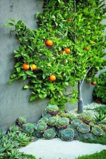Ideas For Your Garden From The Mediterranean Landscape Design04