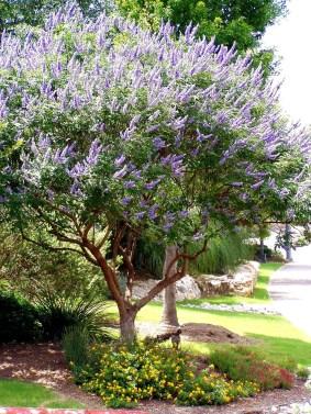 Ideas For Your Garden From The Mediterranean Landscape Design18