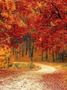 Soothing Autumn Landscape Ideas For This Season07