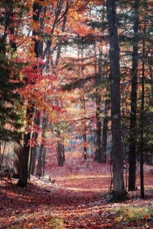 Soothing Autumn Landscape Ideas For This Season10