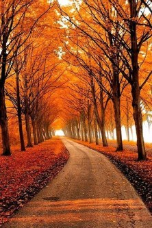 Soothing Autumn Landscape Ideas For This Season14