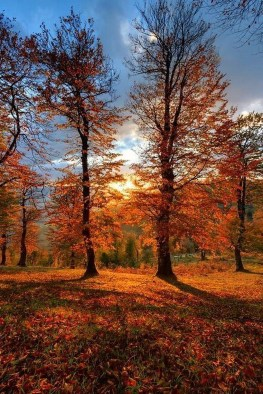 Soothing Autumn Landscape Ideas For This Season16