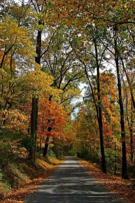 Soothing Autumn Landscape Ideas For This Season26