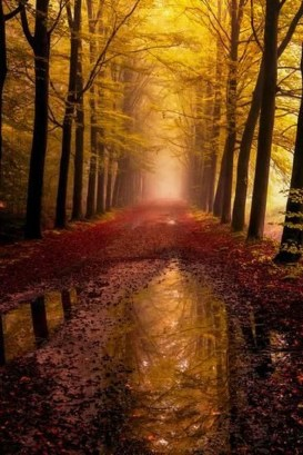 Soothing Autumn Landscape Ideas For This Season28