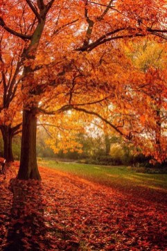 Soothing Autumn Landscape Ideas For This Season35