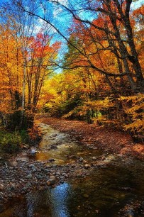 Soothing Autumn Landscape Ideas For This Season42