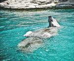 The Swimming Bear Reframe Metaphor