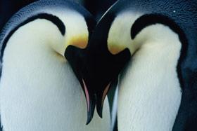050819_penguins1