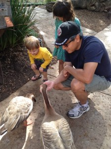 Dennis and the kids with geese