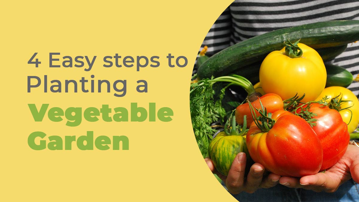 steps to planting a vegetable garden