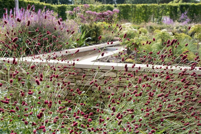 Sanguisorba 'Bordeaux' in full flower with a rill running though the flower garden.