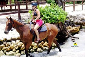 Horse Back Ride and Swim Jamaica