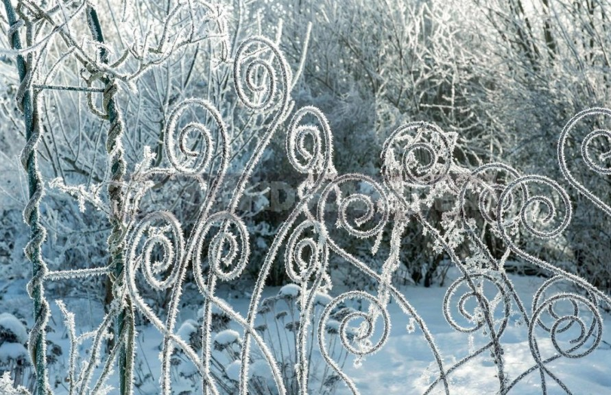 Garden Design In Winter: Techniques And Accents Of ...