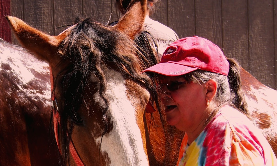 The author with her new Clydesdale friend, Oneida.