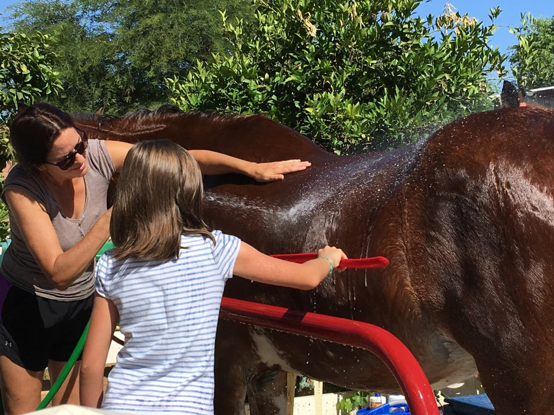 It's bath day for the Clydesdales.