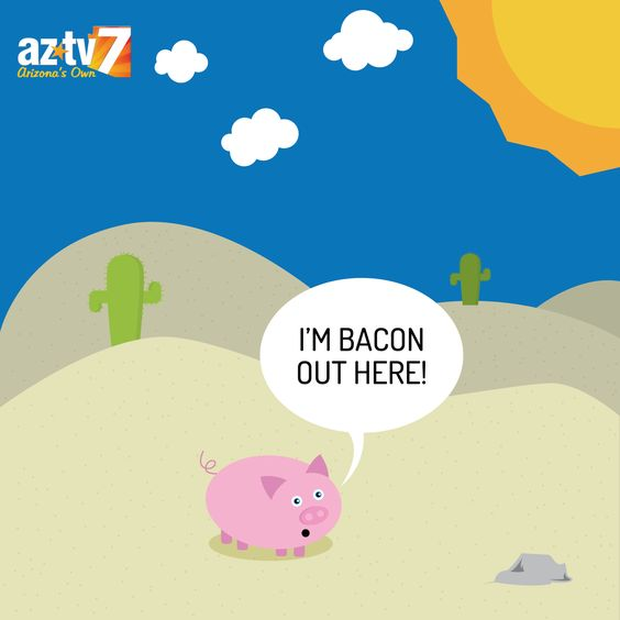 """Pig is """"Bacon"""" in the sun"""