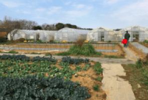 Iijima Farm strawberry and vegetable picking