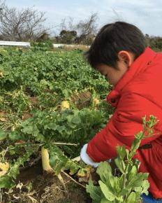 Iijima Farm dig