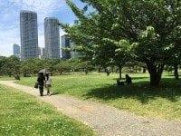 Hamarikyu Garden, Japanese garden