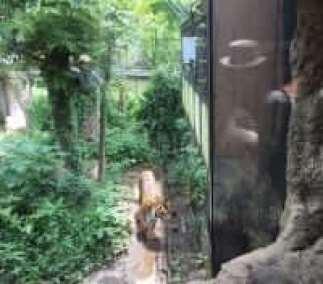Ueno Zoo (Ueno, Tokyo), Tokyo with kids Zoos and Aquariums