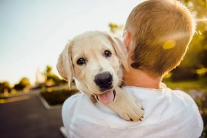 dog and a boy