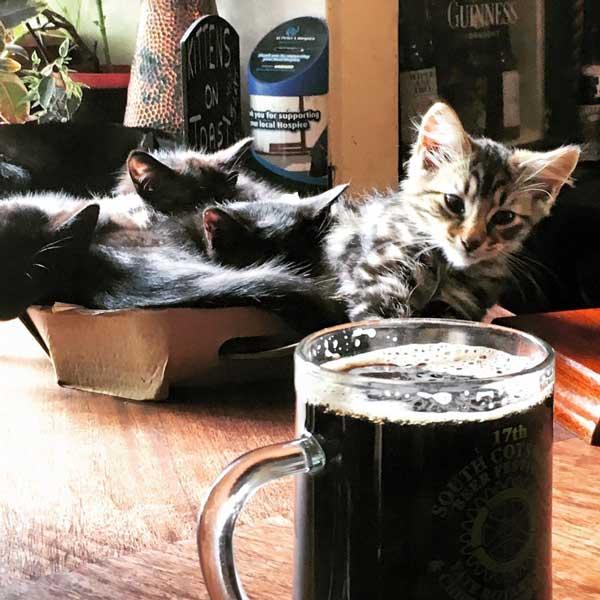 kittens in pubs