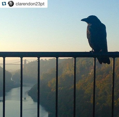 bird clifton suspension bridge