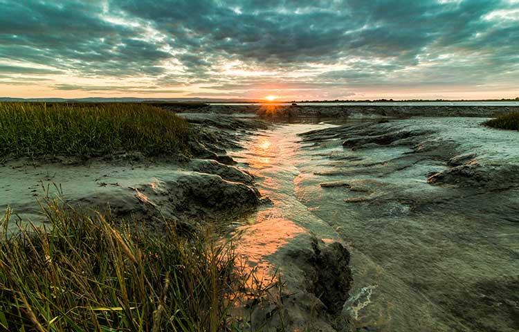 muddy coast
