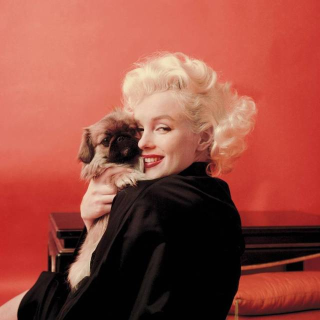 Marilyn Monroe with Puppy