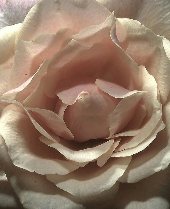 "Watch ""Tonight I celebrate my love – Peabo Bryson & Roberta Flack (With lyrics) [HQ]"" on YouTube"