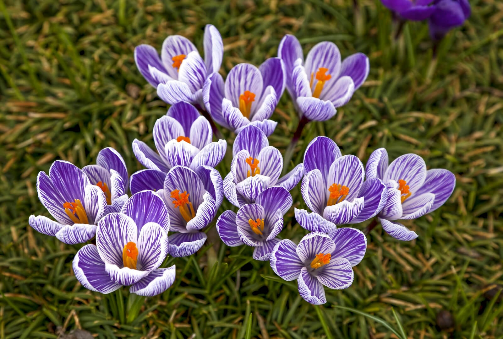 Gardening In Jersey Planting Fall Bulbs For Spring