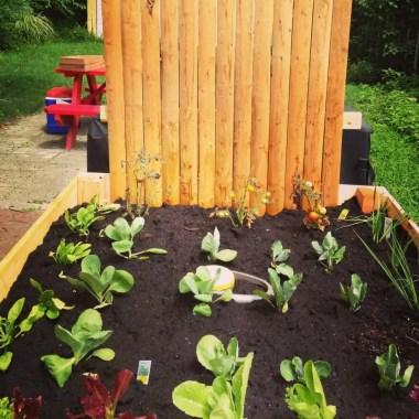Healthy Benefits of Gardening