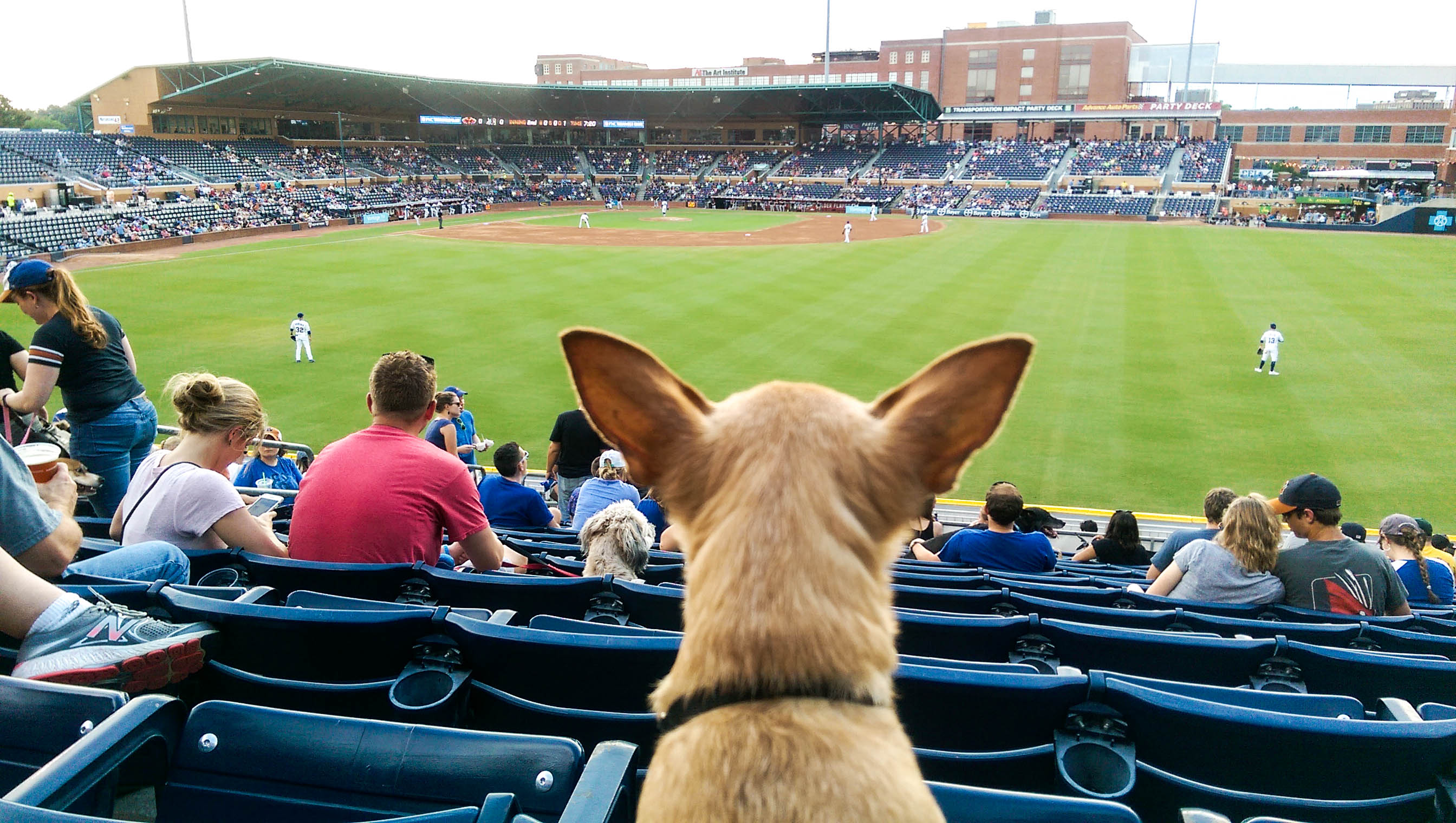 12 Best Places To Take Your Dog In Durham This Summer Best Of The Bull