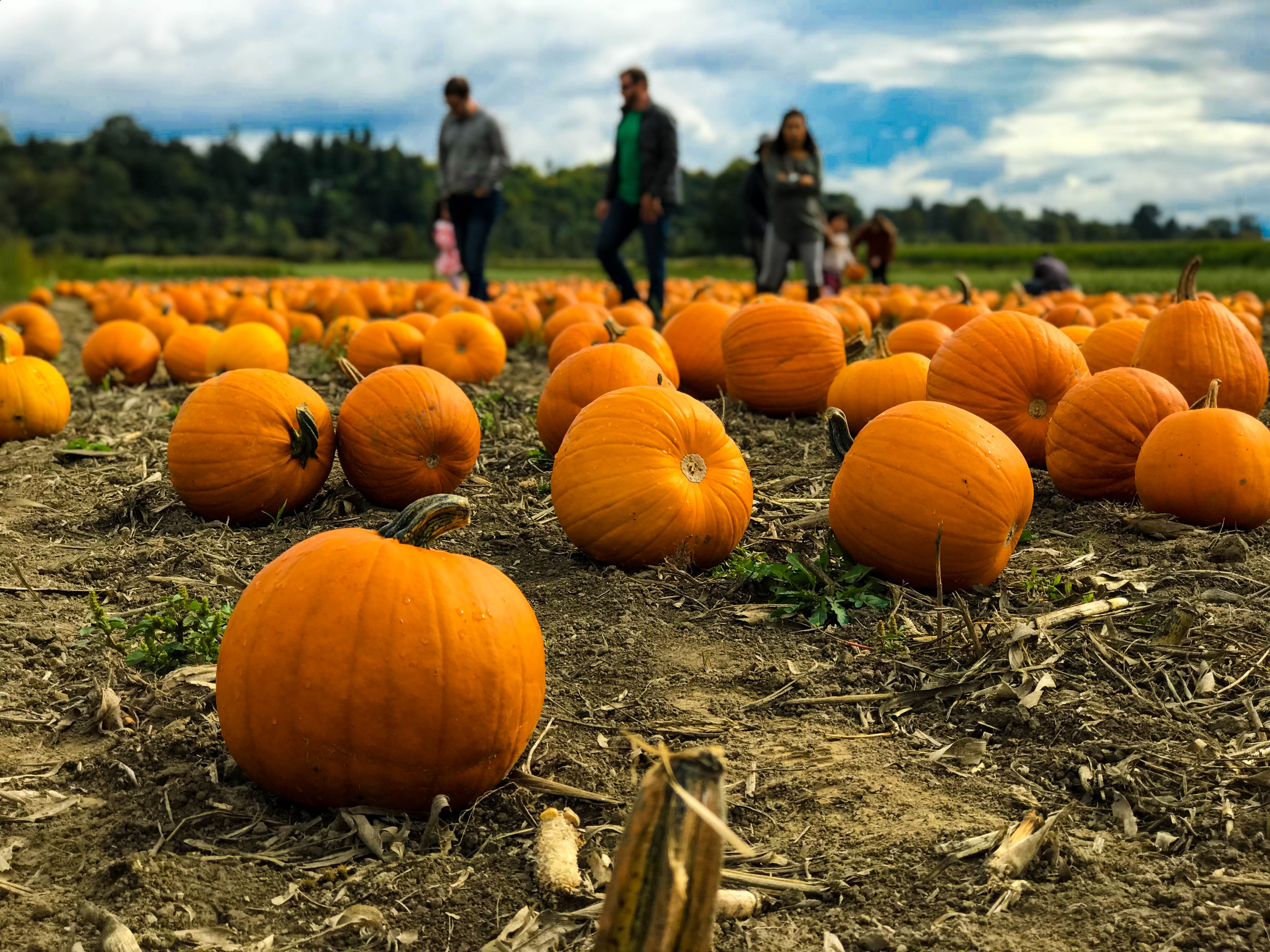 Your Guide To All The Fall Festivals Activities And Halloween
