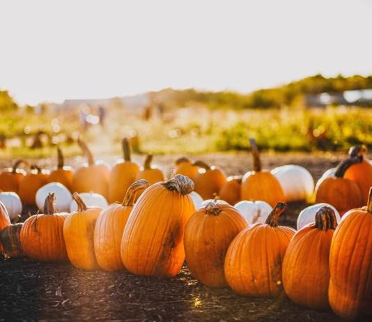pumpkin patches durham nc corn maze