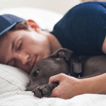 5 celebs who love pets