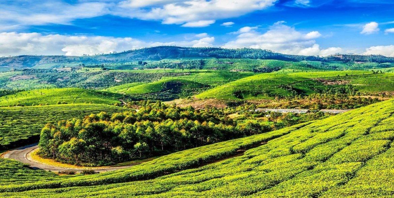 Munnar: Admire Green Vistas