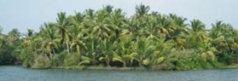 Kerala.jpg(elatrip.com)