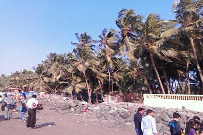 Swaying of trees at Gorai Beach (Copyright image-IMG-20130109-WA0019)