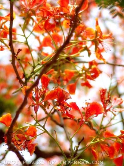 Flowers_delhi